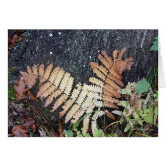 Fern Richness Card