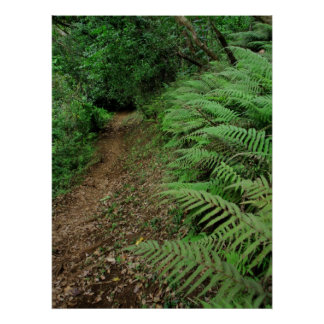 Ferns along hiking trail poster