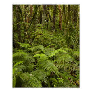 Ferns and native bush near Matai Falls, Catlins Poster