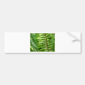Ferns Bumper Sticker