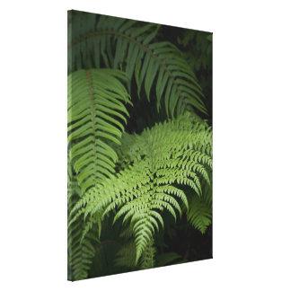 Ferns Canvas Prints