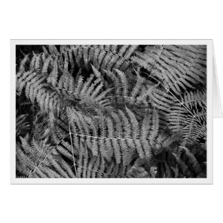 Ferns Cards