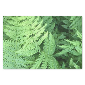 Ferns in the forest tissue paper