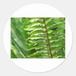Ferns Round Sticker