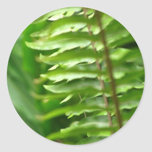 Ferns Stickers
