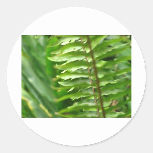 Ferns Round Stickers