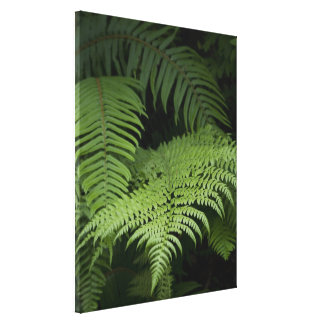 Ferns Stretched Canvas Prints