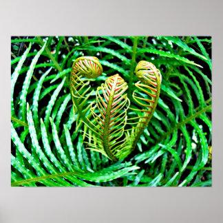 Ferns Unfurling Poster