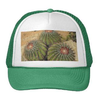 Ferocactus - Barrel Cactus Hat