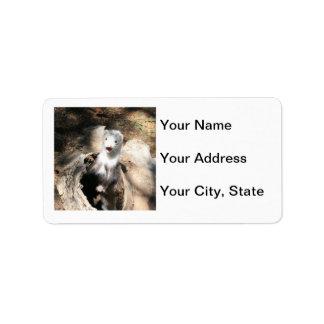 Ferret Address Label