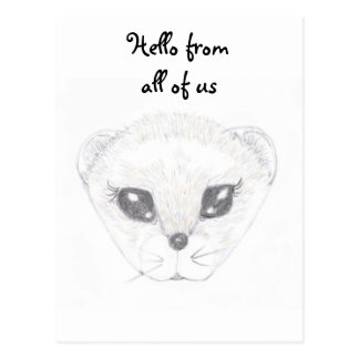 Ferret Picture Post Card