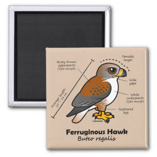 Ferruginous Hawk Statistics Magnet
