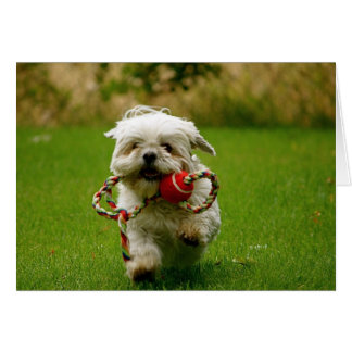 Fetching Puppy Card