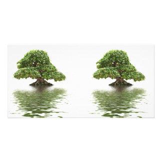 Ficus bonsai customized photo card