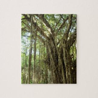Ficus Tree, Hawaii Puzzles