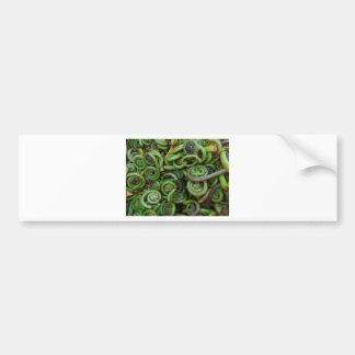 Fiddlehead Ferns Bumper Sticker