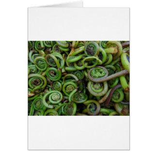 Fiddlehead Ferns Card