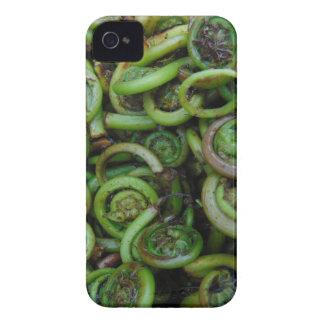 Fiddlehead Ferns iPhone 4 Cover