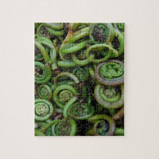 Fiddlehead Ferns Jigsaw Puzzle