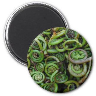 Fiddlehead Ferns Magnet