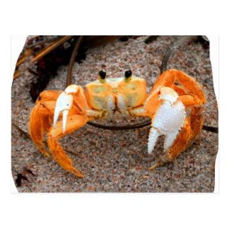 Fiddler crab on beach colourized orange on sand postcard