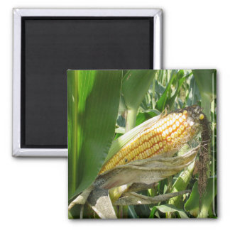 Field Corn Magnet