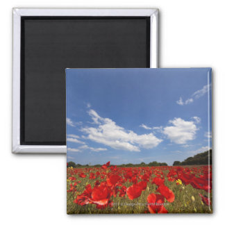 Field Full Of Red Flowers Magnet