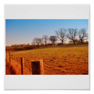 Field in a sunny afternoon posters