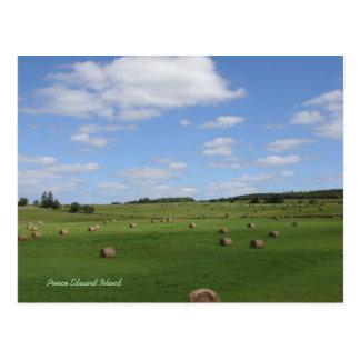 Field in PEI postcard