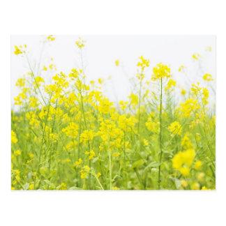 Field Mustard 2 Postcard