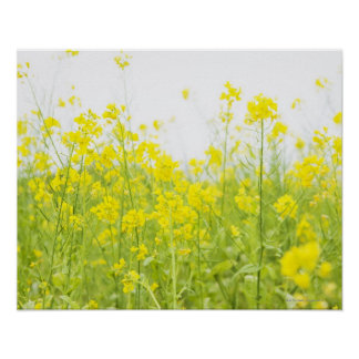 Field Mustard 2 Poster