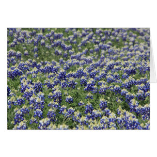 Field of Bluebonnets Card