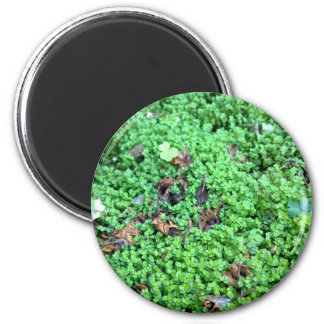 Field of Clovers 6 Cm Round Magnet