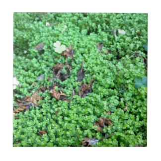 Field of Clovers Tile