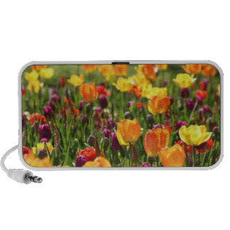 Field of colorful flowers on an iPhone speaker