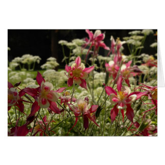 Field of Columbines Card