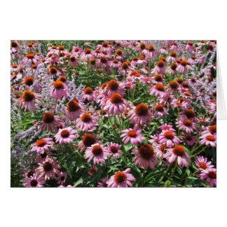 Field of Cone Flowers Card
