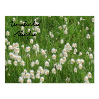 Field of Cotton Flowers Postcard