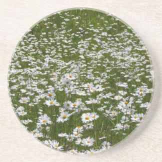 Field of Daisies Nature Photo Coaster