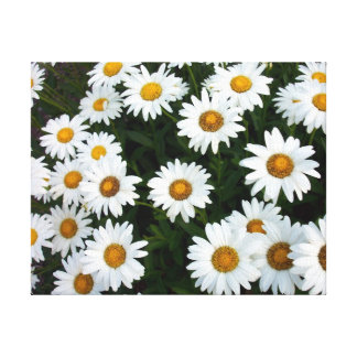 Field of Daisies ( Small)  Stretched Canvas Print