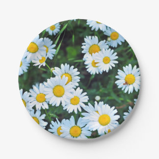 Field of Daisies Summer Party Paper Plate
