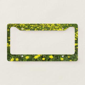 Field of Dandelions Licence Plate Frame
