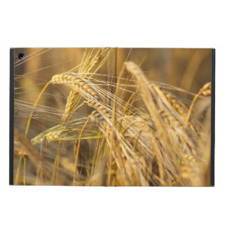 Field of gold (wheat ears) cover for iPad air