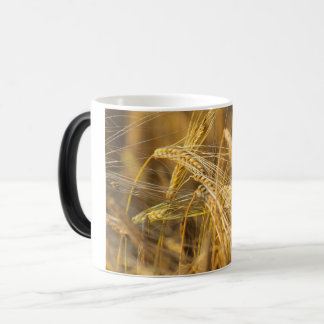 Field of gold (wheat ears) magic mug