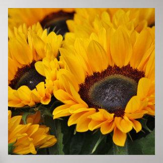 Field of Golden Sunflowers Print