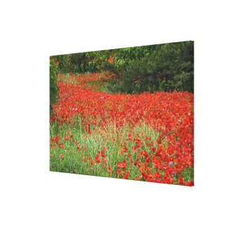 Field of hybrid poppy flowers planted along gallery wrap canvas