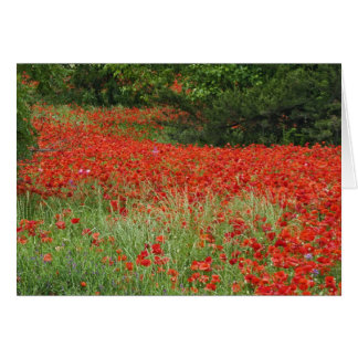 Field of hybrid poppy flowers planted along greeting card