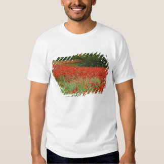 Field of hybrid poppy flowers planted along tshirts