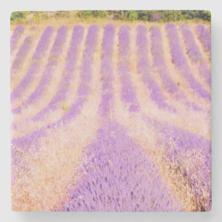 Field Of Lavender Provence France Coaster