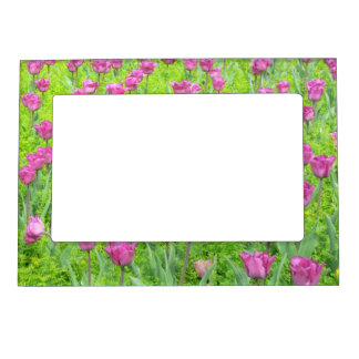 FIELD OF MAUVE COLORED TULIPS (PHOTOG) MAGNETIC PICTURE FRAME